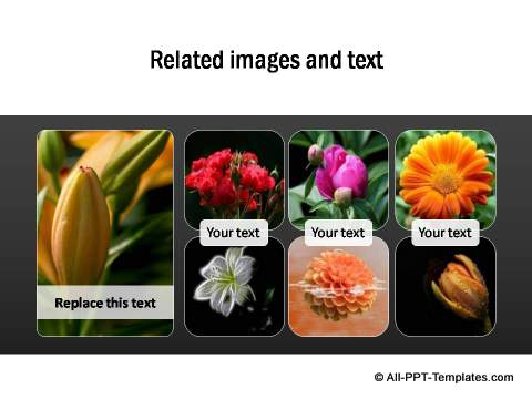 PowerPoint Image Layout 07