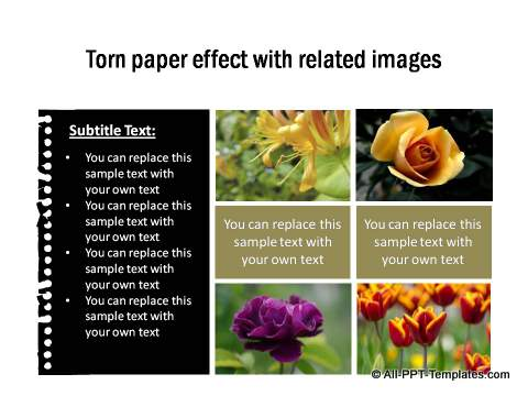 PowerPoint Image Layout 01