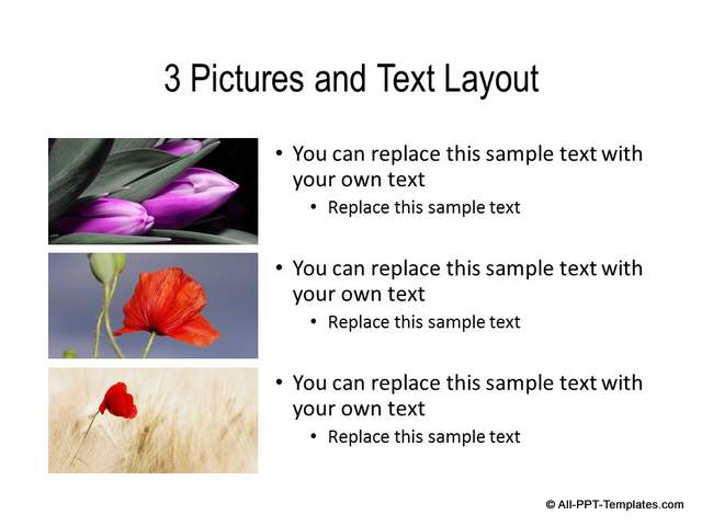 PowerPoint Custom Slide Layout with Content