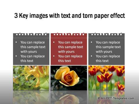 PowerPoint Image Layout 02
