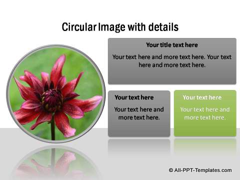 PowerPoint Image Layout  13